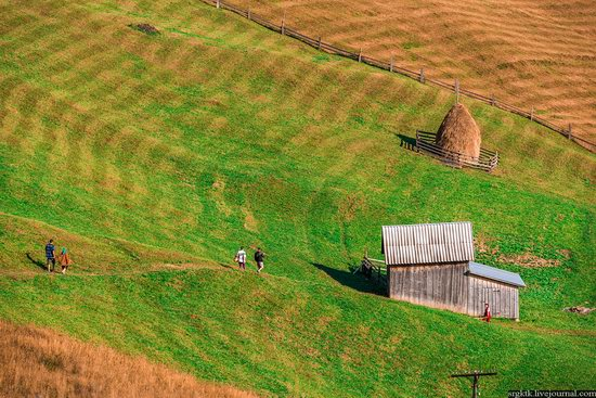 Yellow-green world of the Carpathians during haymaking, Ukraine, photo 11