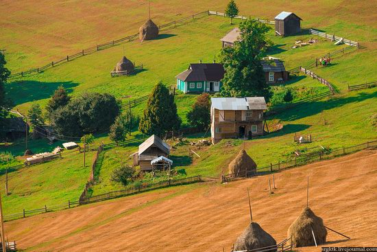 Yellow-green world of the Carpathians during haymaking, Ukraine, photo 12