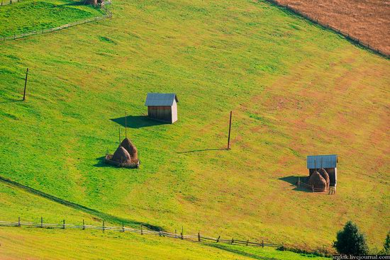 Yellow-green world of the Carpathians during haymaking, Ukraine, photo 13