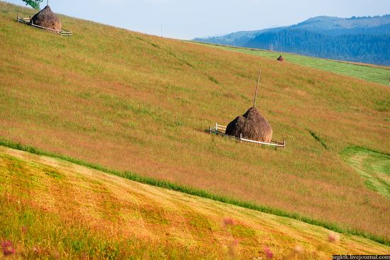 Yellow-green world of the Carpathians during haymaking, Ukraine, photo 14
