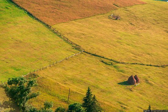 Yellow-green world of the Carpathians during haymaking, Ukraine, photo 15