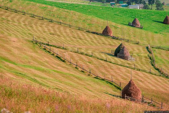 Yellow-green world of the Carpathians during haymaking, Ukraine, photo 16
