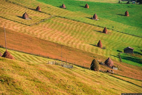 Yellow-green world of the Carpathians during haymaking, Ukraine, photo 17