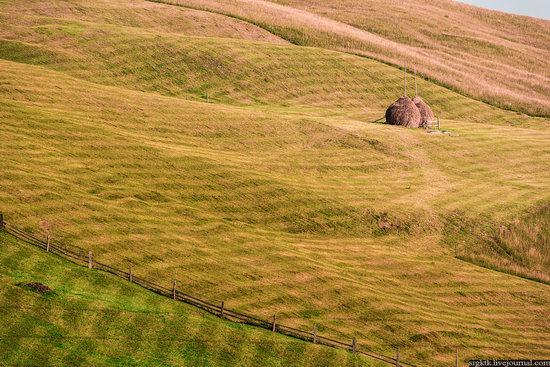 Yellow-green world of the Carpathians during haymaking, Ukraine, photo 2
