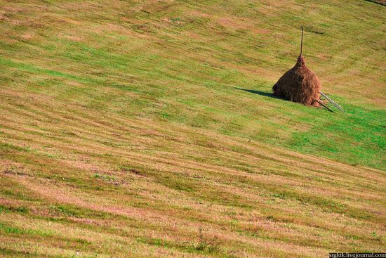 Yellow-green world of the Carpathians during haymaking, Ukraine, photo 3