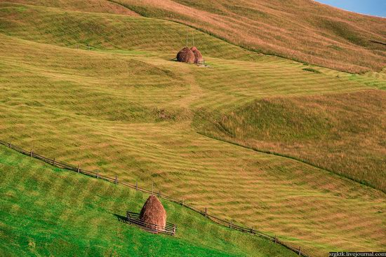 Yellow-green world of the Carpathians during haymaking, Ukraine, photo 4