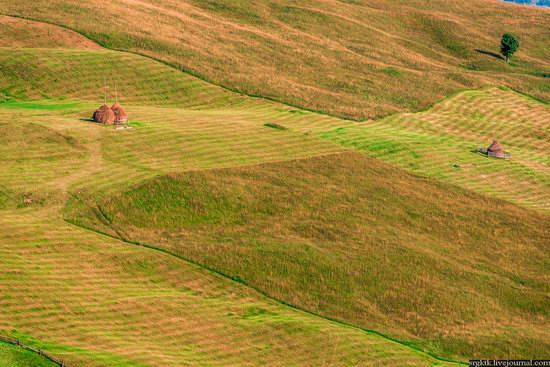 Yellow-green world of the Carpathians during haymaking, Ukraine, photo 5