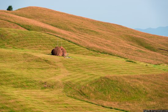 Yellow-green world of the Carpathians during haymaking, Ukraine, photo 6