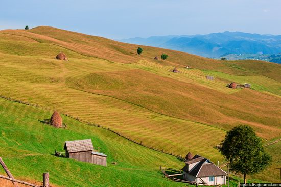 Yellow-green world of the Carpathians during haymaking, Ukraine, photo 7