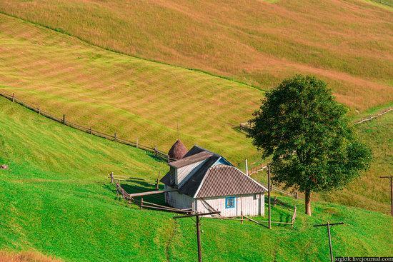 Yellow-green world of the Carpathians during haymaking, Ukraine, photo 9