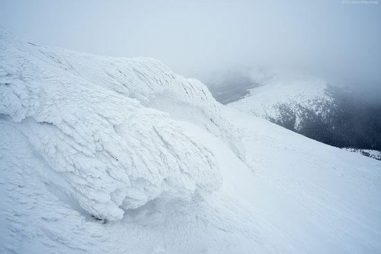 Snowy winter, Mount Pip Ivan, the Carpathians, Ukraine, photo 5