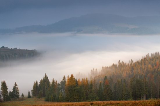 One misty autumn morning in the Carpathians, Ukraine, photo 7