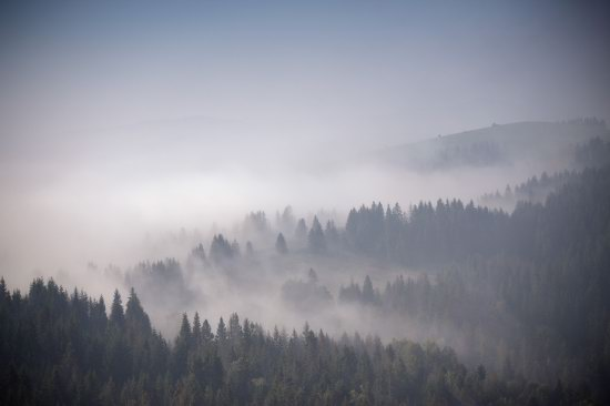 One misty autumn morning in the Carpathians, Ukraine, photo 8