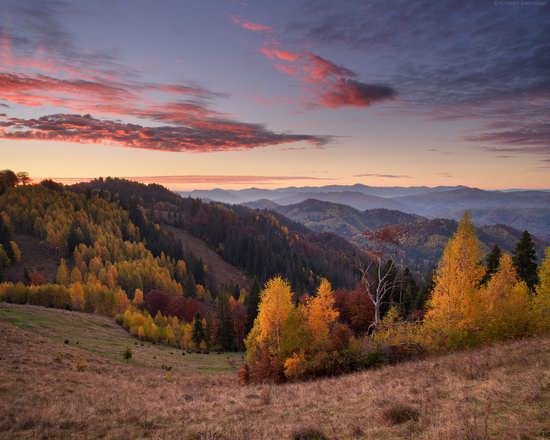 Golden autumn, Sokilsky Ridge, the Carpathians, Ukraine, photo 11