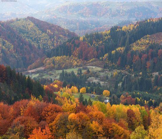Golden autumn, Sokilsky Ridge, the Carpathians, Ukraine, photo 14
