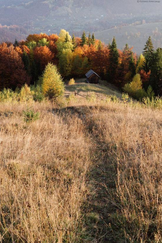Golden autumn, Sokilsky Ridge, the Carpathians, Ukraine, photo 16