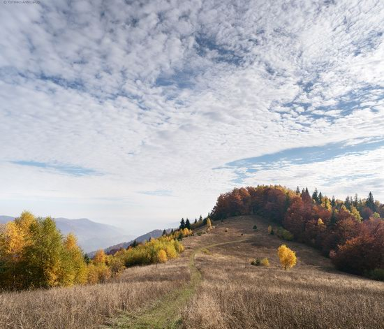 Golden autumn, Sokilsky Ridge, the Carpathians, Ukraine, photo 17