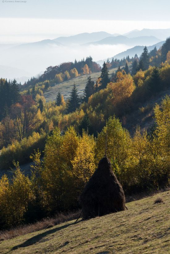 Golden autumn, Sokilsky Ridge, the Carpathians, Ukraine, photo 18