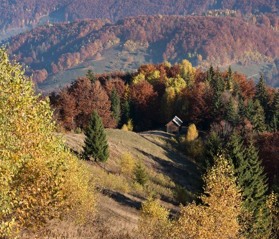 Golden autumn, Sokilsky Ridge, the Carpathians, Ukraine, photo 19