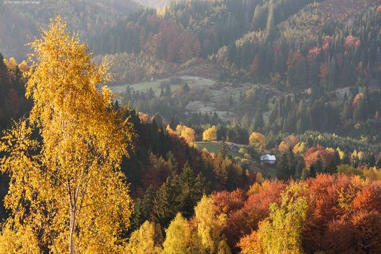 Golden autumn, Sokilsky Ridge, the Carpathians, Ukraine, photo 2