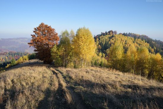 Golden autumn, Sokilsky Ridge, the Carpathians, Ukraine, photo 20