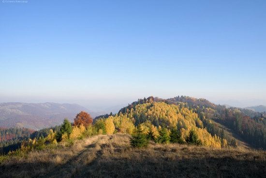 Golden autumn, Sokilsky Ridge, the Carpathians, Ukraine, photo 21