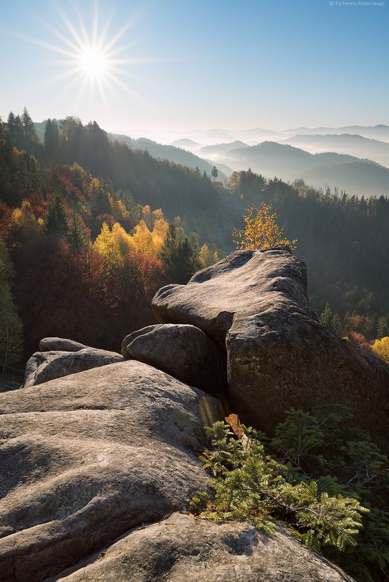 Golden autumn, Sokilsky Ridge, the Carpathians, Ukraine, photo 23