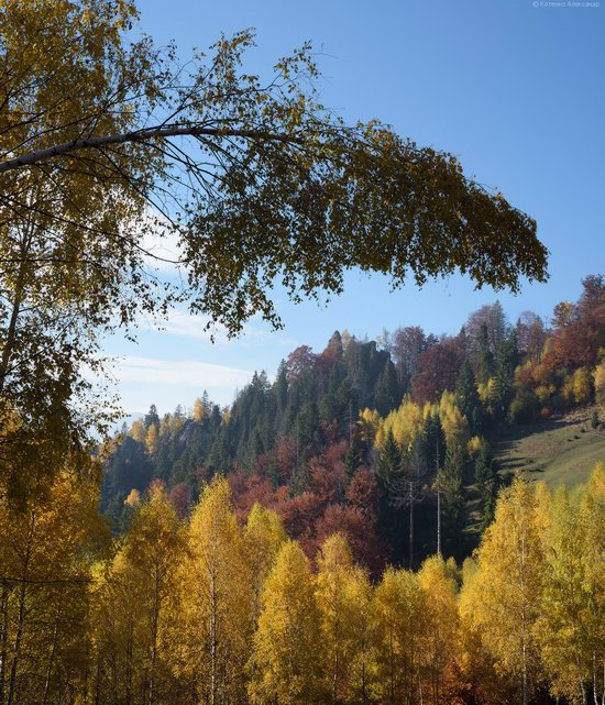 Golden autumn, Sokilsky Ridge, the Carpathians, Ukraine, photo 24
