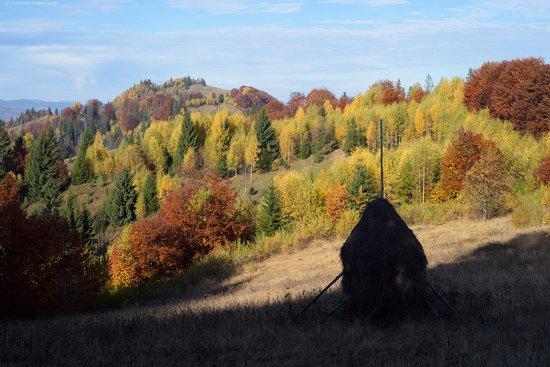 Golden autumn, Sokilsky Ridge, the Carpathians, Ukraine, photo 25