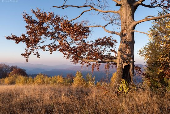 Golden autumn, Sokilsky Ridge, the Carpathians, Ukraine, photo 26