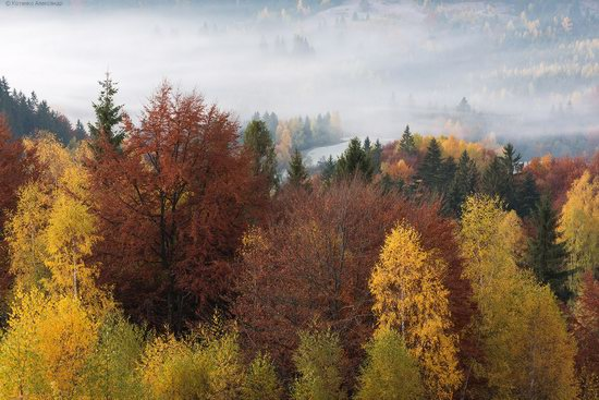 Golden autumn, Sokilsky Ridge, the Carpathians, Ukraine, photo 3