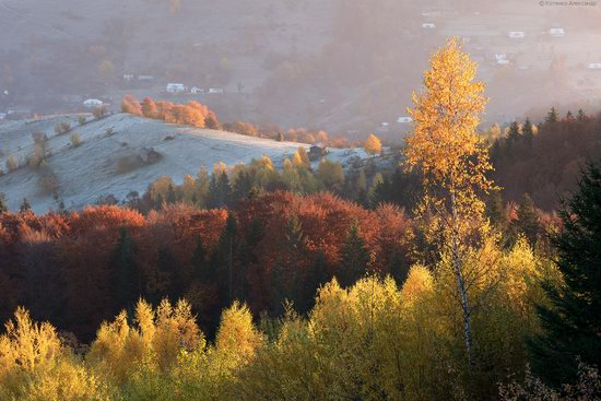 Golden autumn, Sokilsky Ridge, the Carpathians, Ukraine, photo 5