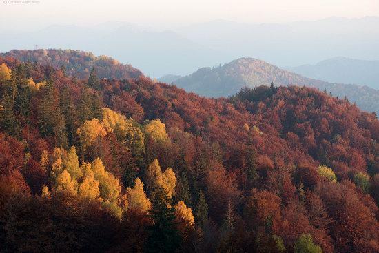 Golden autumn, Sokilsky Ridge, the Carpathians, Ukraine, photo 7