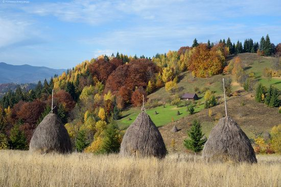 Golden autumn, Sokilsky Ridge, the Carpathians, Ukraine, photo 9