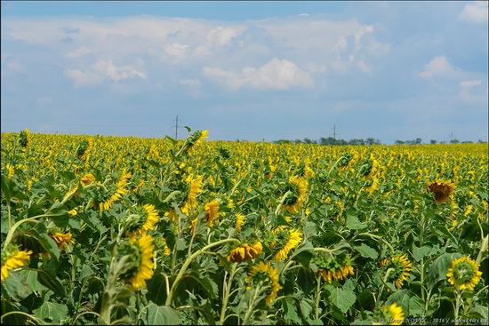 Hot summer day near Berdyansk, Ukraine, photo 2