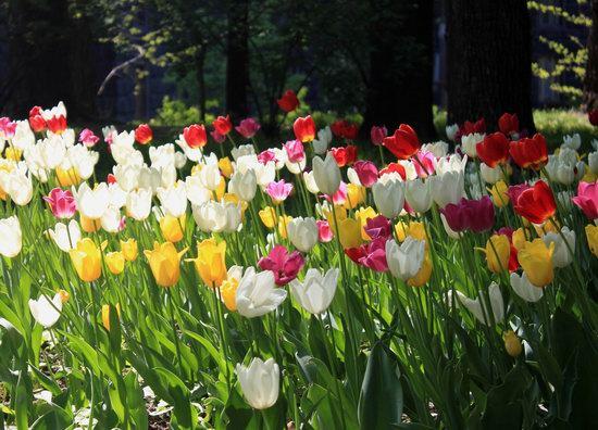 Early May in Kyiv, Ukraine, photo 12