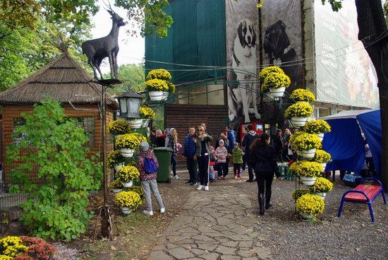 Ball of Chrysanthemums, Feldman Ecopark, Kharkiv, Ukraine, photo 12