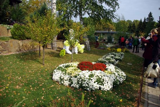 Ball of Chrysanthemums, Feldman Ecopark, Kharkiv, Ukraine, photo 21