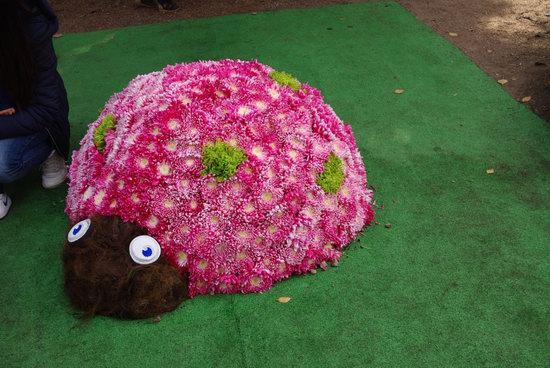 Ball of Chrysanthemums, Feldman Ecopark, Kharkiv, Ukraine, photo 24