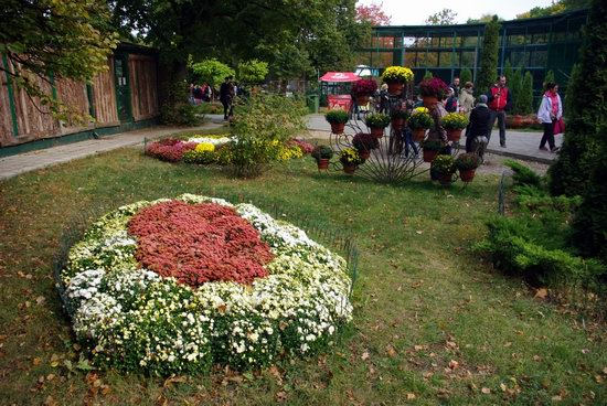 Ball of Chrysanthemums, Feldman Ecopark, Kharkiv, Ukraine, photo 26
