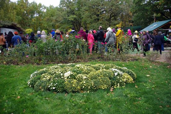 Ball of Chrysanthemums, Feldman Ecopark, Kharkiv, Ukraine, photo 5