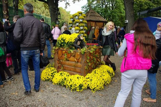 Ball of Chrysanthemums, Feldman Ecopark, Kharkiv, Ukraine, photo 6