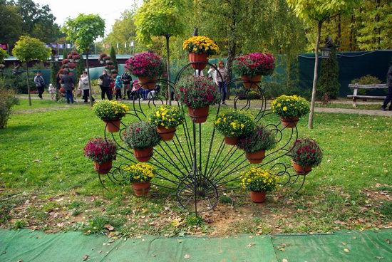 Ball of Chrysanthemums, Feldman Ecopark, Kharkiv, Ukraine, photo 9