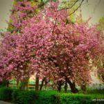 Blooming Spring in Uzhhorod