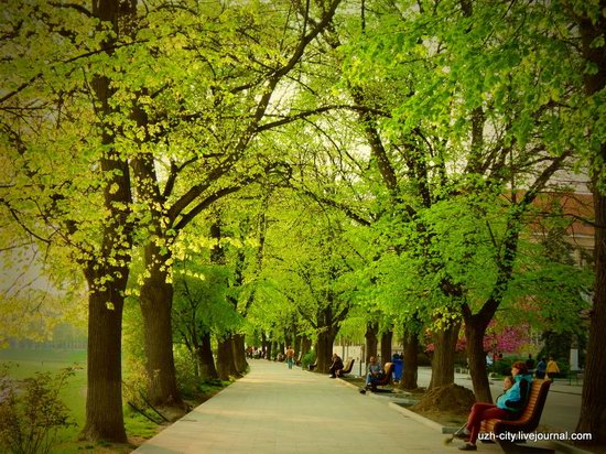 Blooming Spring in Uzhhorod, Ukraine, photo 10