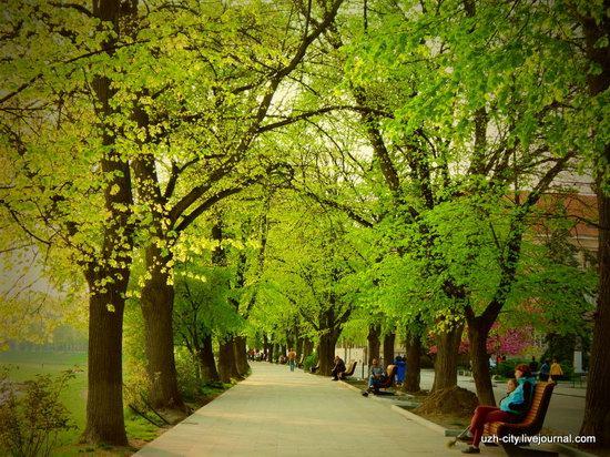 Blooming Spring in Uzhhorod, Ukraine, photo 10