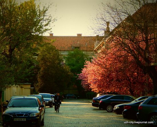 Blooming Spring in Uzhhorod, Ukraine, photo 12