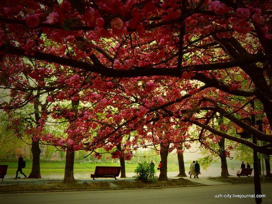 Blooming Spring in Uzhhorod, Ukraine, photo 17