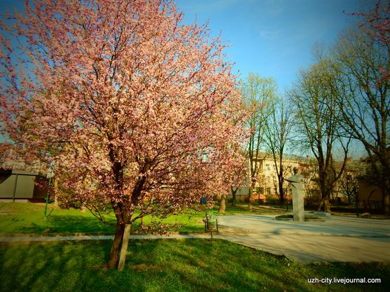 Blooming Spring in Uzhhorod, Ukraine, photo 20