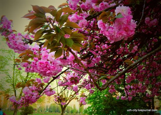 Blooming Spring in Uzhhorod, Ukraine, photo 21